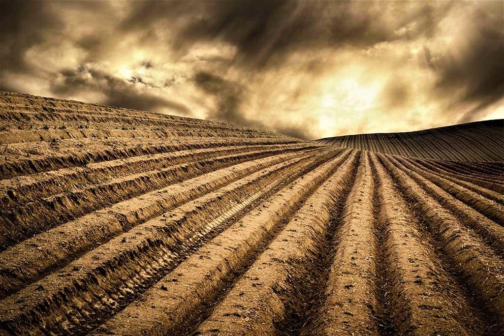 Dry fields-1