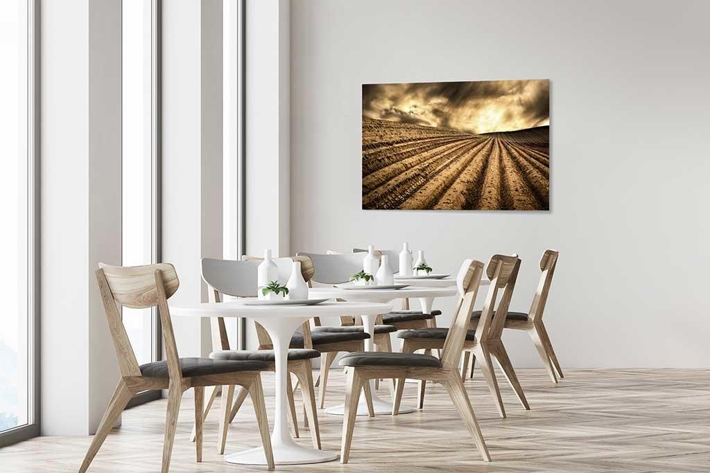 Dry fields-4