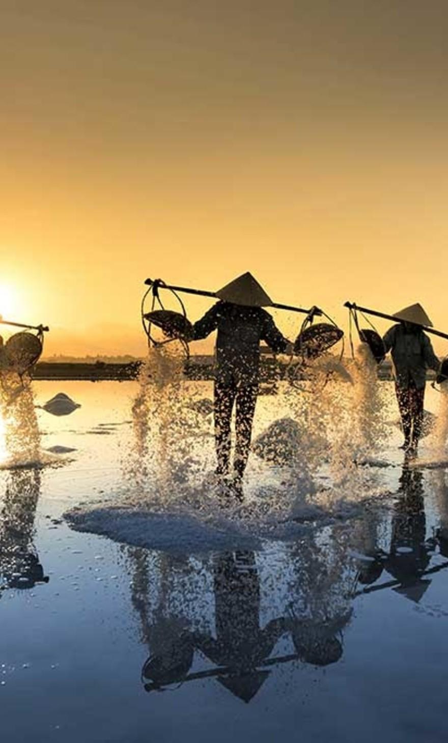 Récolte au Vietnam