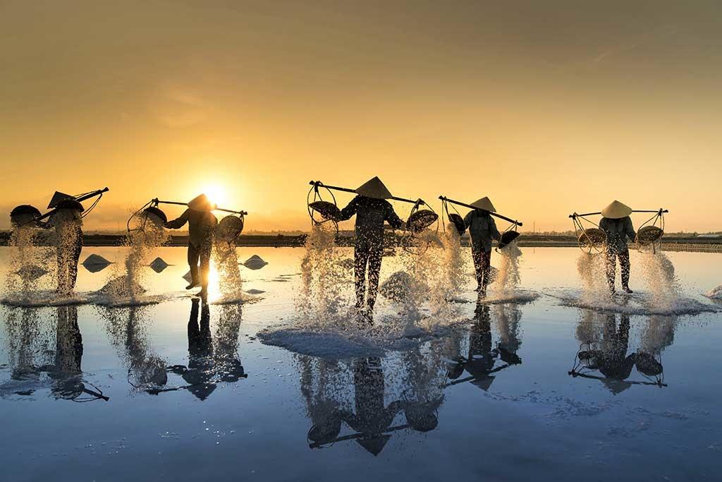 Vietnam harvest