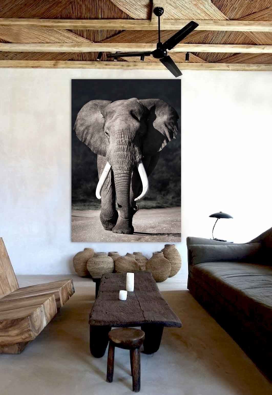 Elephant approaching-2