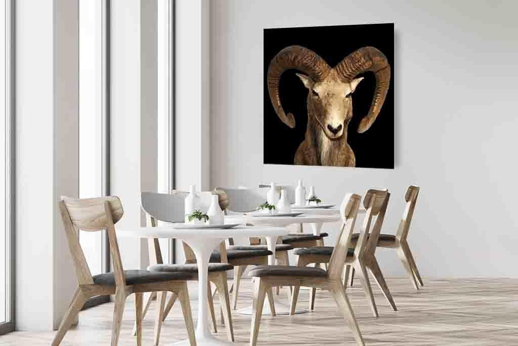 Goat-6