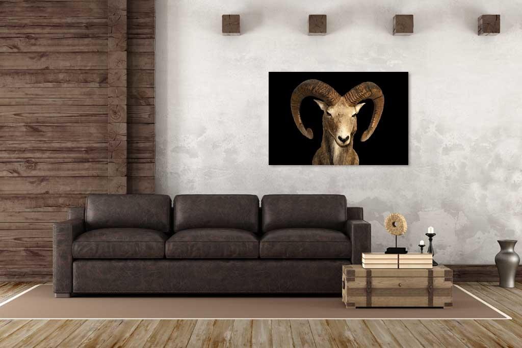 Goat1-3