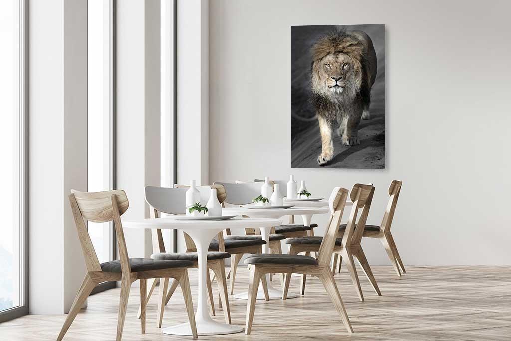 Perfect lion-5