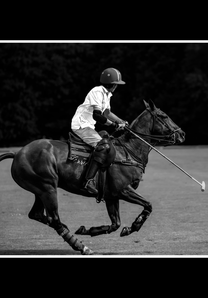 Polo à cheval