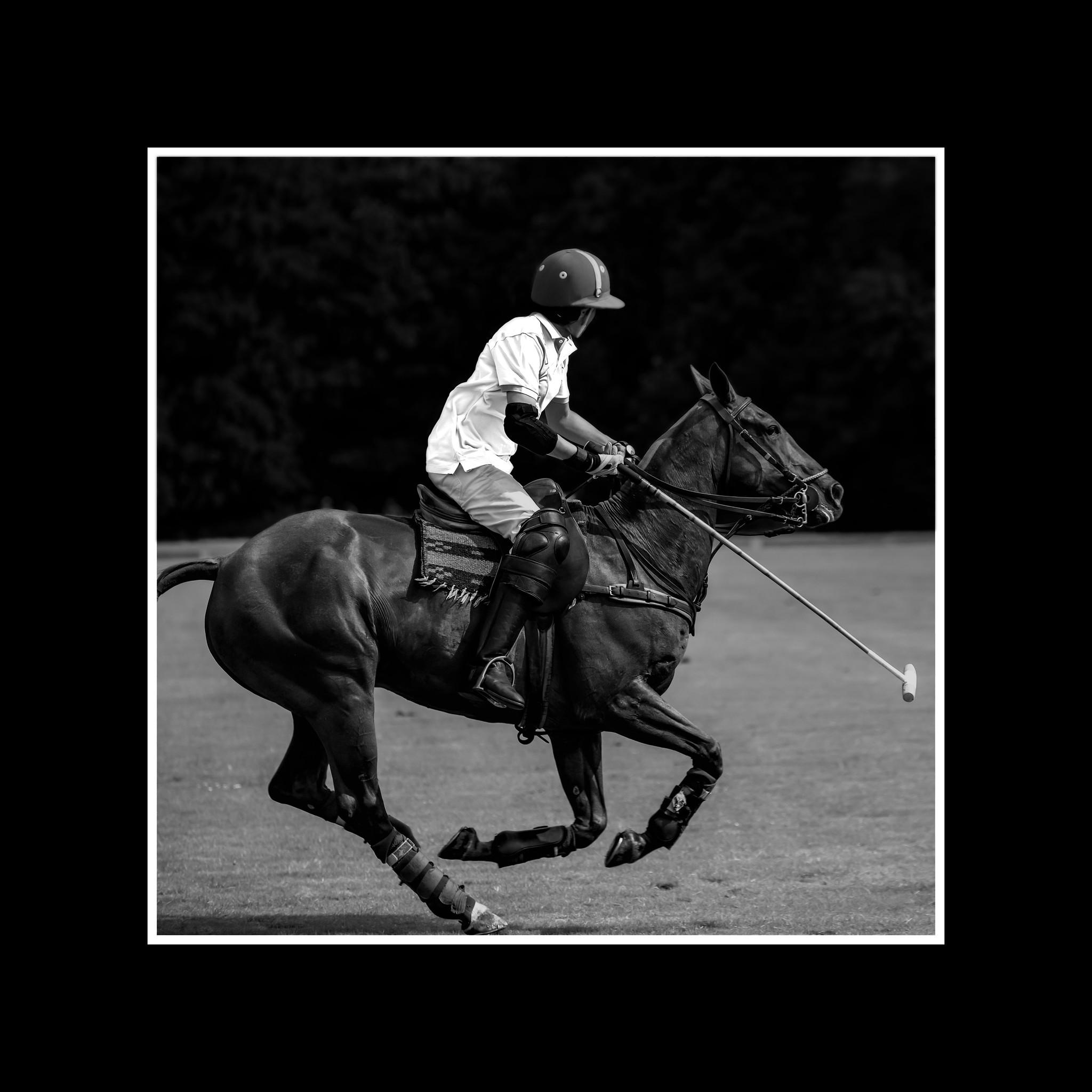 Horse Polo-1