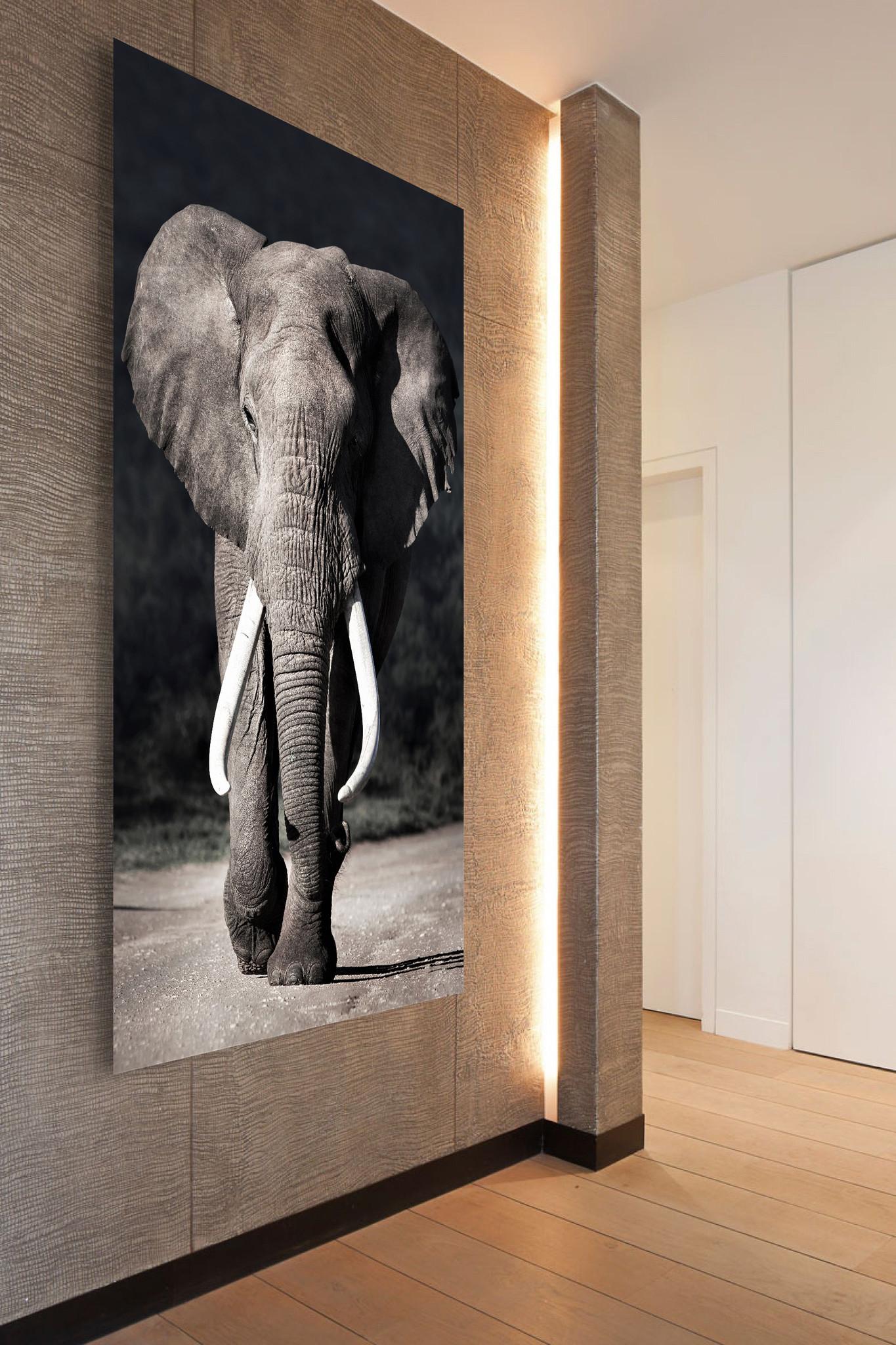 Elephant approaching-3