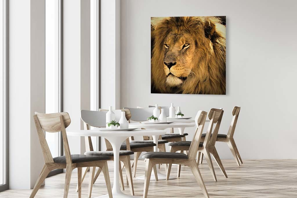 Awesome lion-4