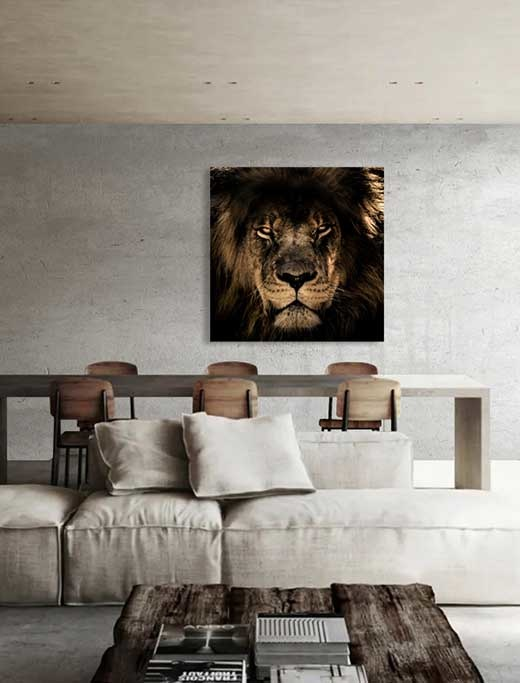 Lion of Africa-5