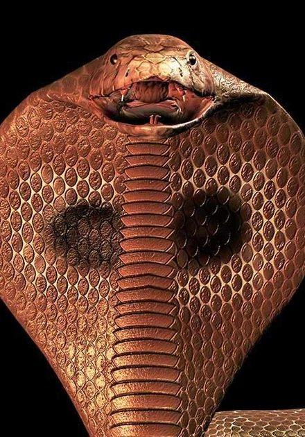 Cobra-art