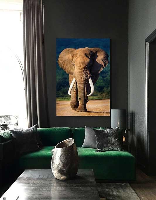 Eléphant de couleur-2