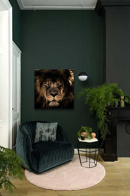 Lion of Africa-3