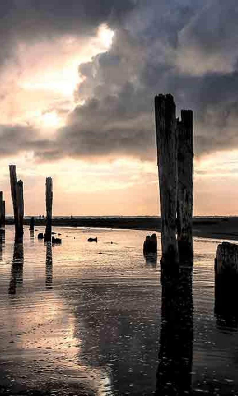 Wooden poles in water