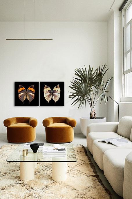 Mariposa natural-2