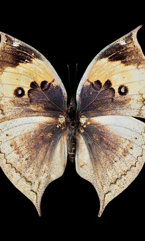 Mariposa natural