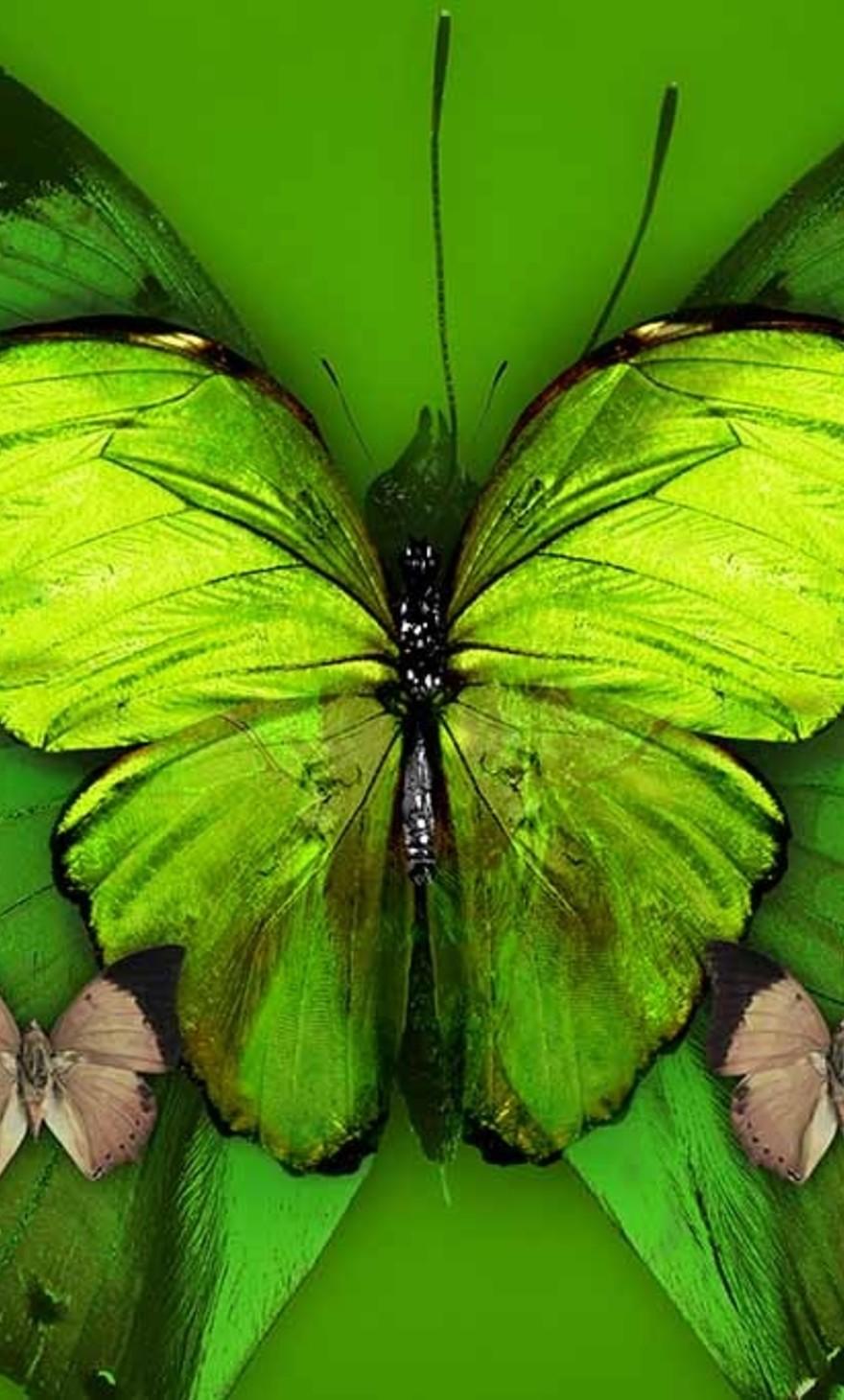 Butterflies special