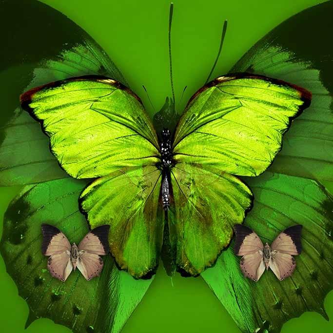 Butterflies special-1