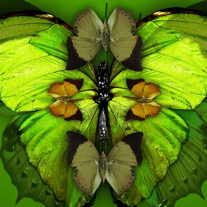 Fabula mariposas