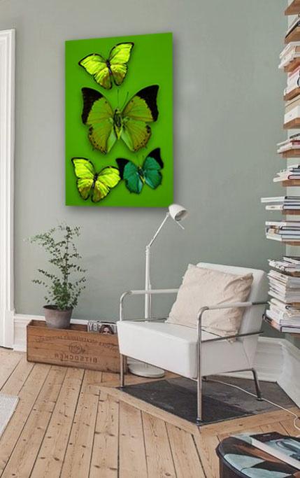 Butterfly flirt-4