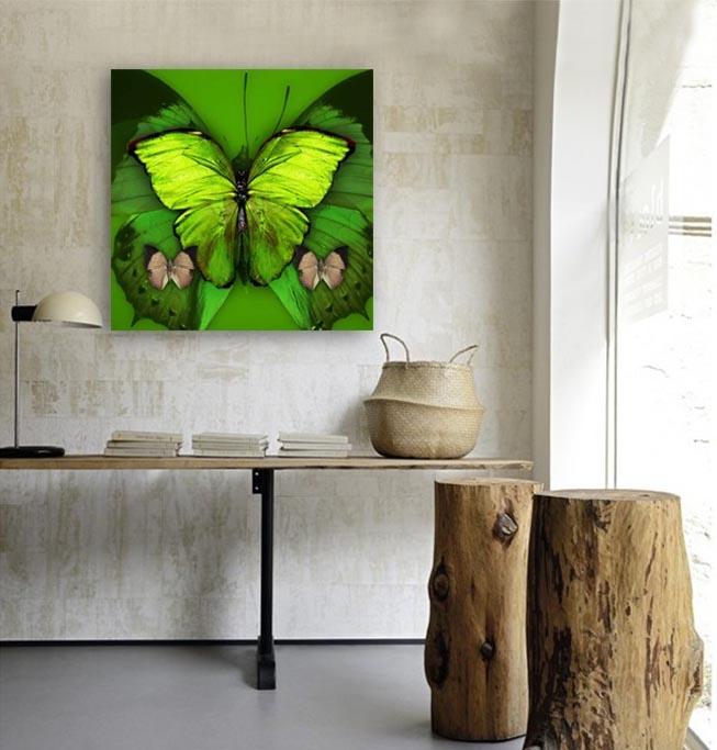 Butterflies special-4