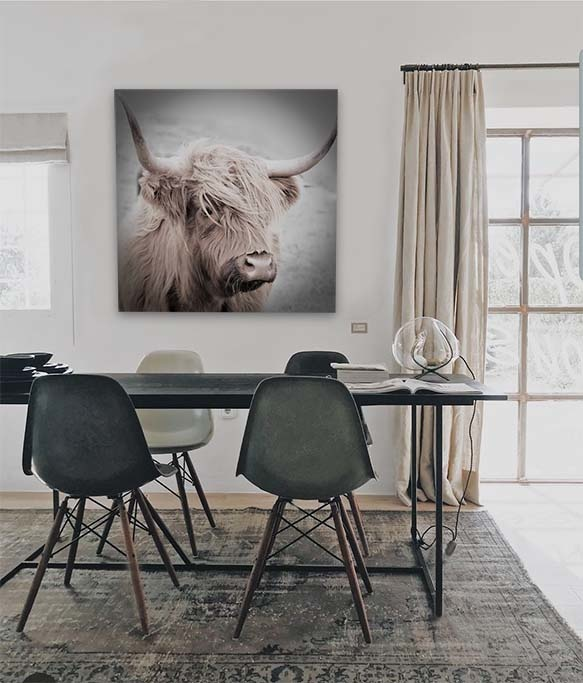 Highland cow-3