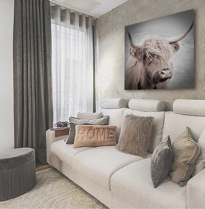 Highland cow-4