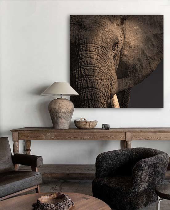 Close up elephant-4