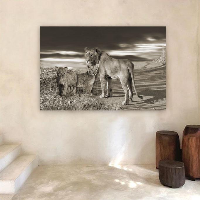 Lion family-3
