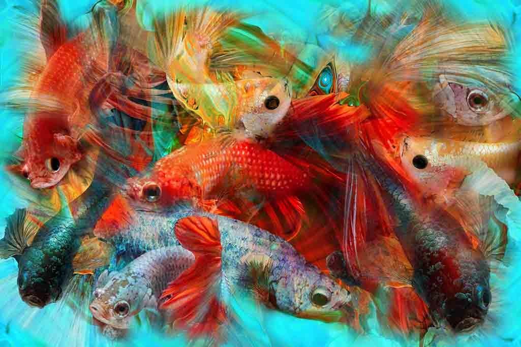 Pescados-1