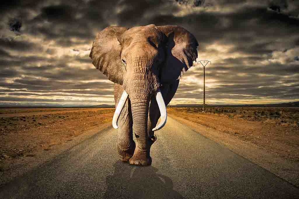 Elephant on the road-1