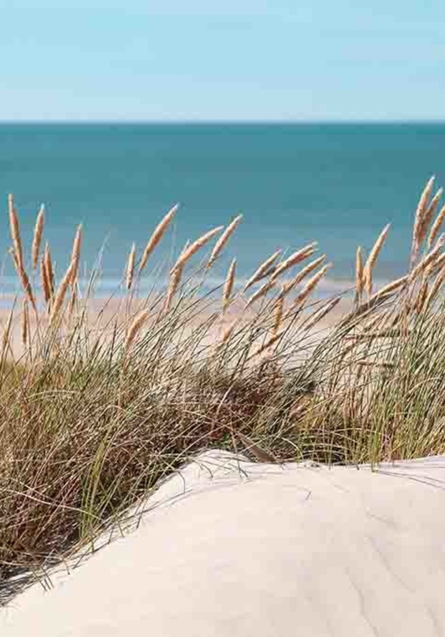 Sea and dunes