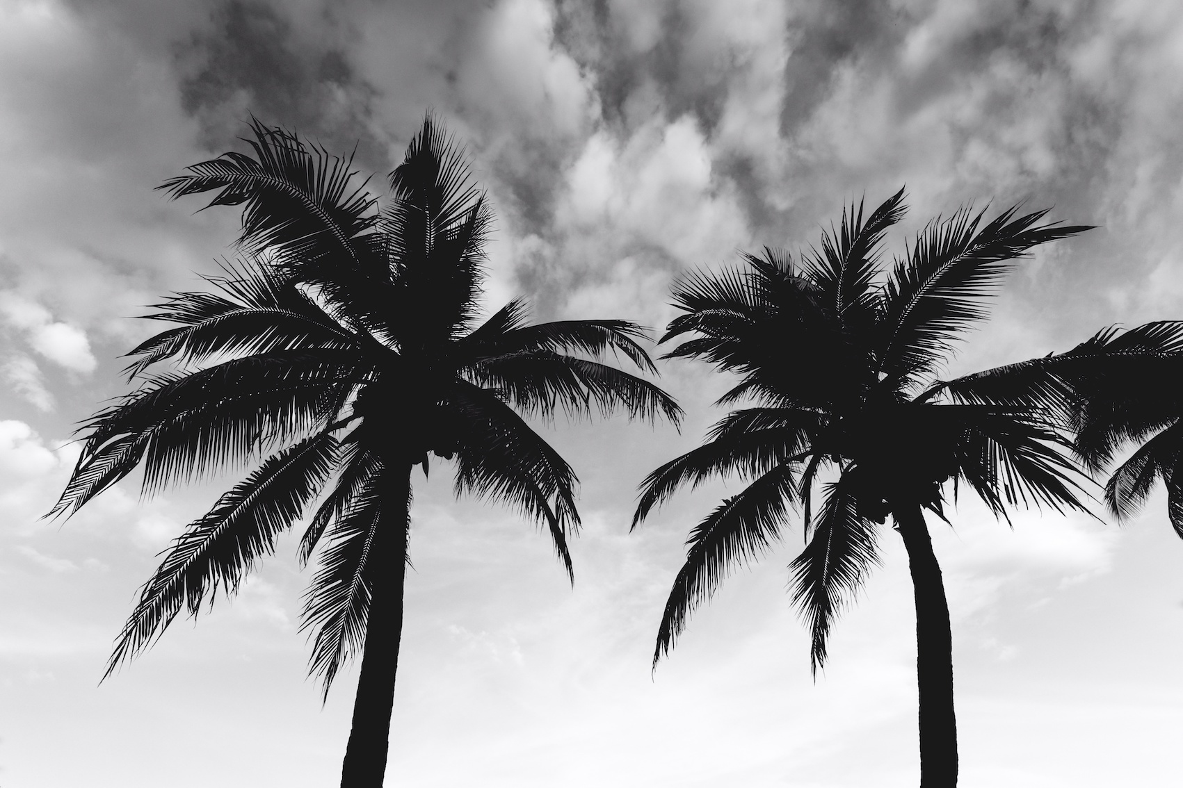 Palm trees in the breeze