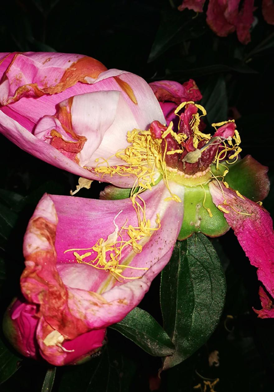 Adore Blossom