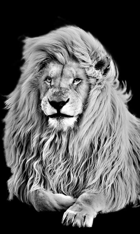 African Predator
