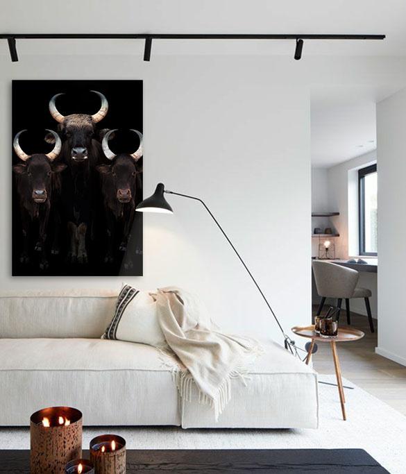 Watusi Cattle-4