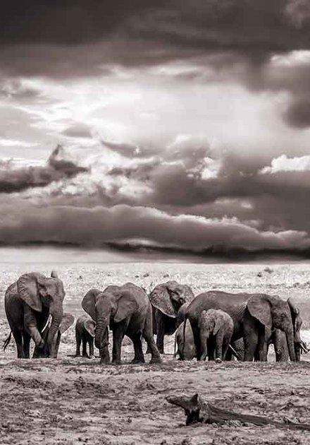 The  elephants family