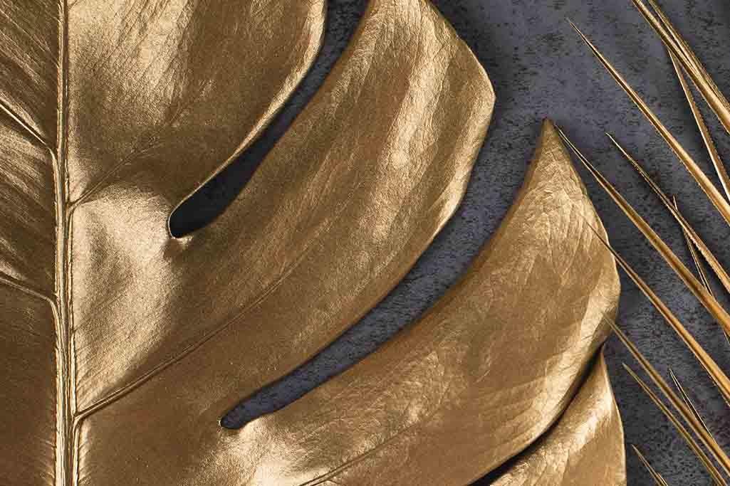 Monstera Gold-1
