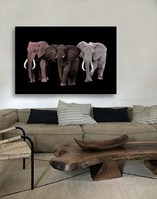 Elephant Tribe-3
