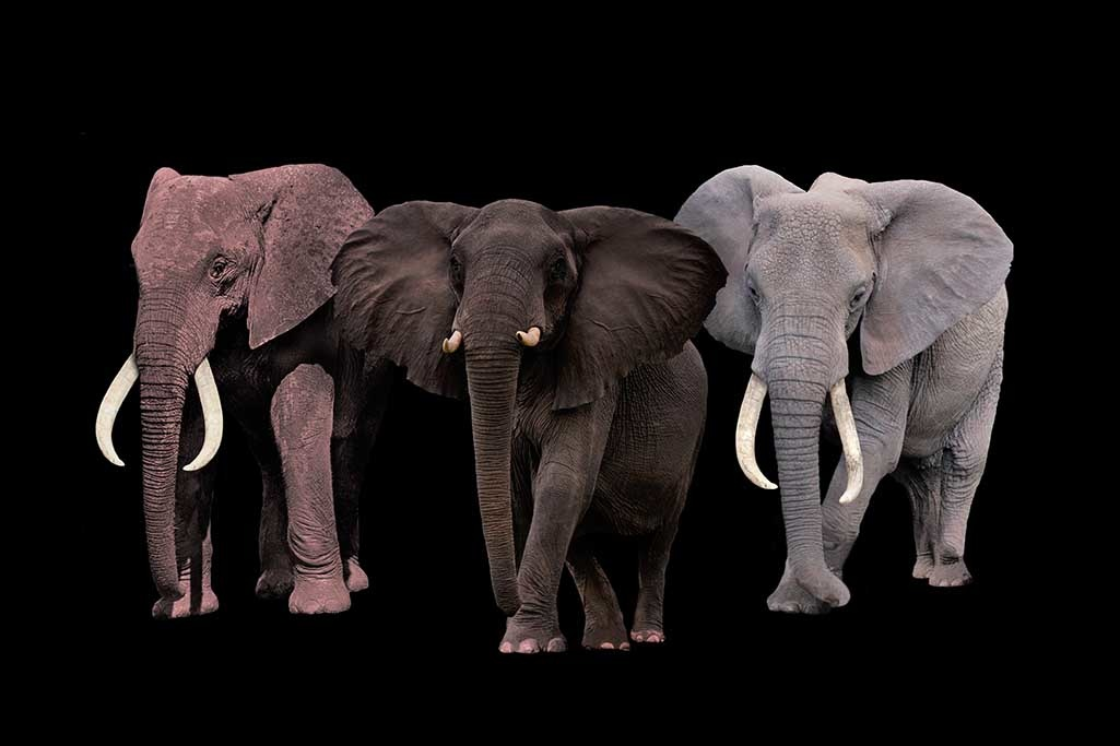 Elephant Tribe