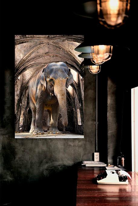 Indian Elephant-3