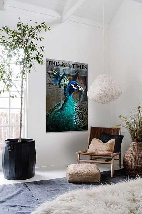 Peacock news-2