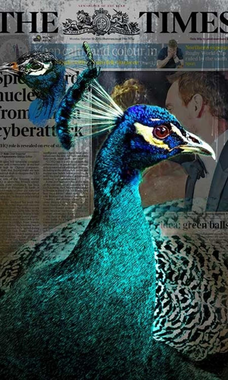 Peacock news