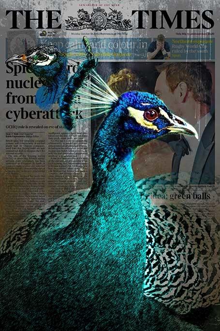 Peacock news-1