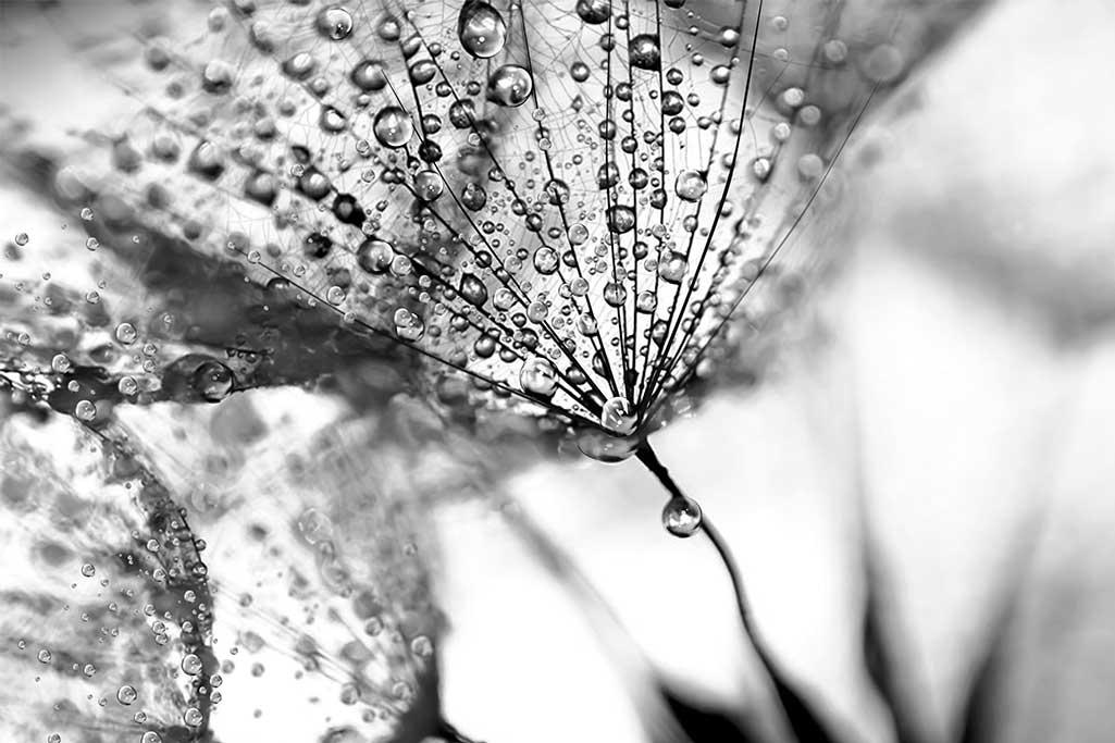 Water drops-1