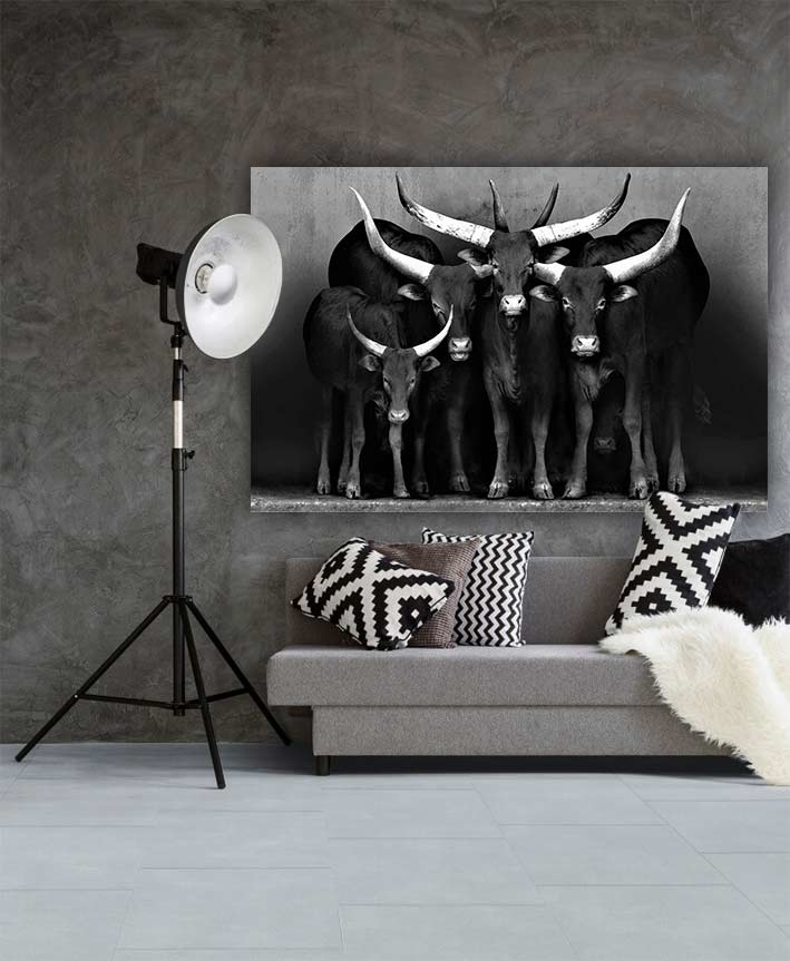 Watusi black&white-3