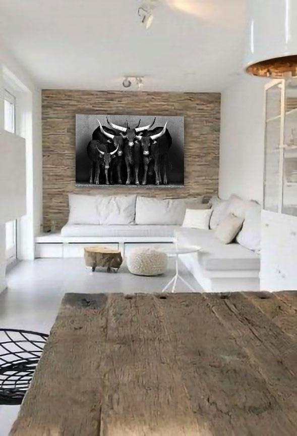 Watusi black&white-4