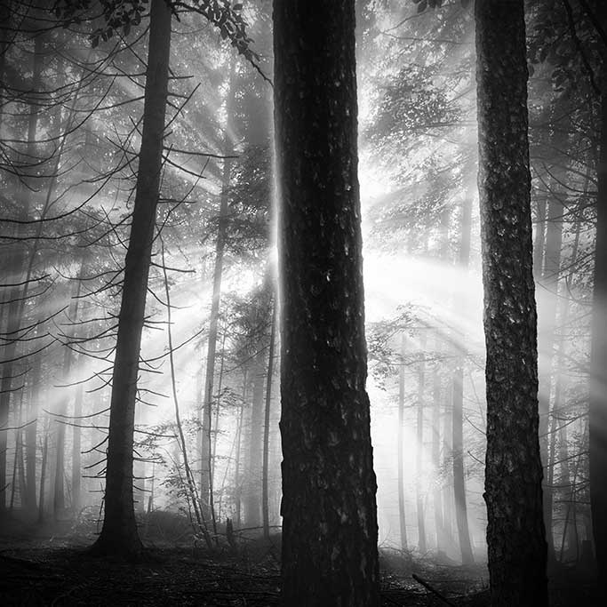 Morning sun in the forest