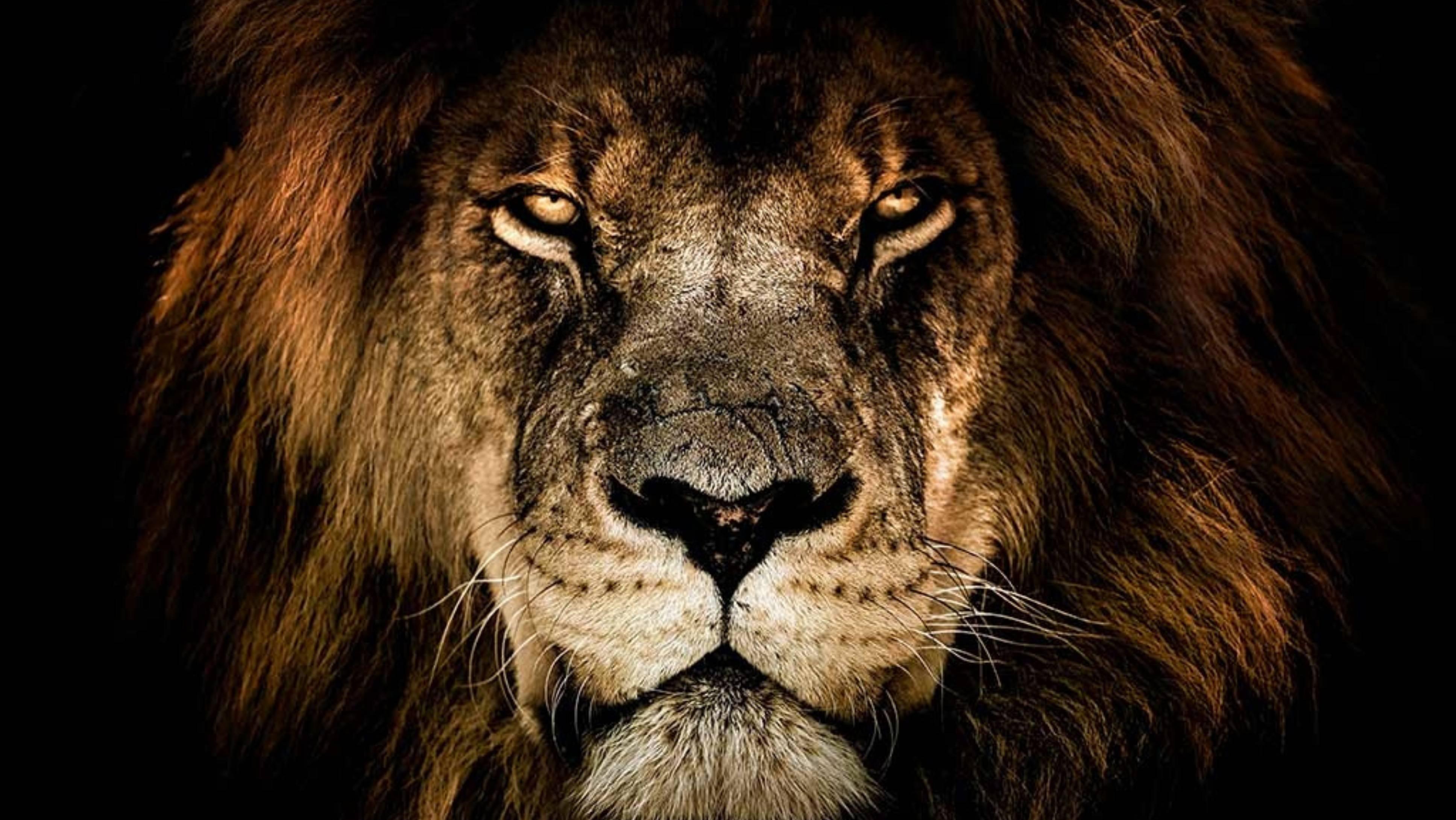 Fabula Lion