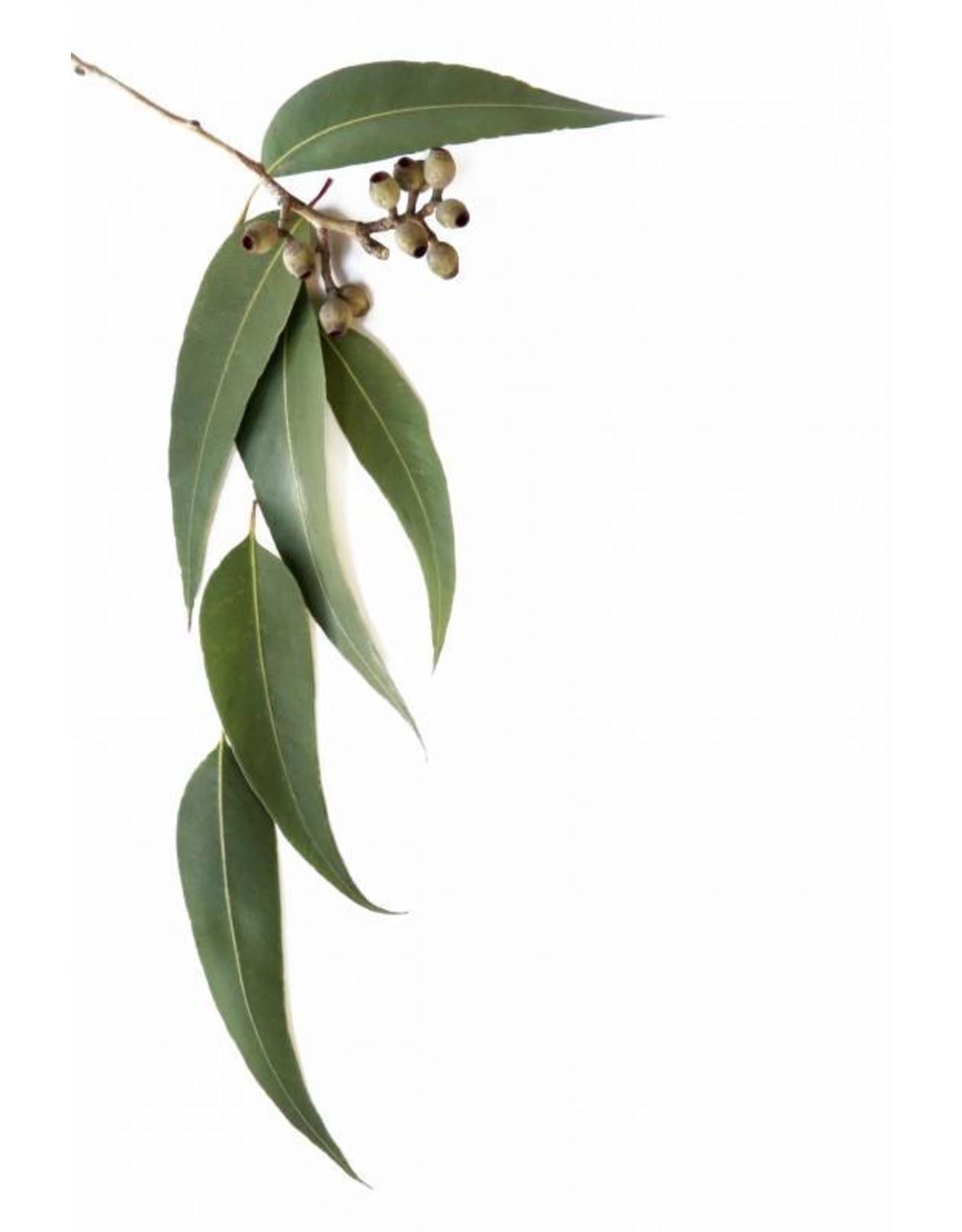 DeOliebaron Etherische olie Eucalyptus  10 ml