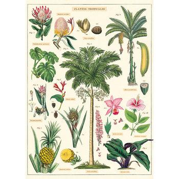 CAVALLINI Poster 50x70cm Vintage Tropicales
